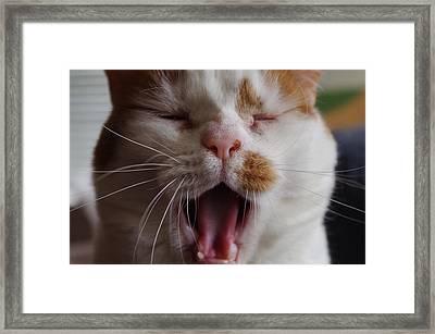 Yawning Cat Framed Print by Sharon Popek