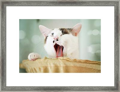 Yawning Cat Framed Print by Yurif