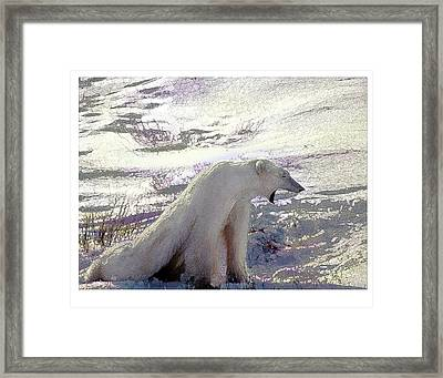 Yawning Polar Bear Framed Print