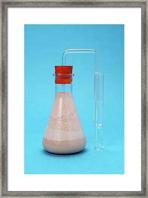 Yeast Fermentation Experiment Framed Print