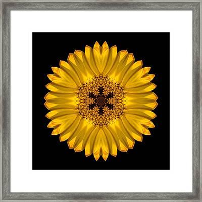 Yellow African Daisy Flower Mandala Framed Print