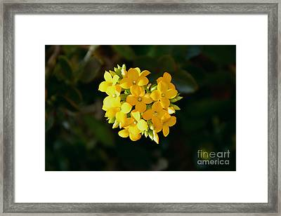 Framed Print featuring the photograph Yellow Allegria  by Ramona Matei