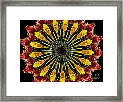 Yellow And Apricot Orchids Kaleidoscope Framed Print by Rose Santuci-Sofranko