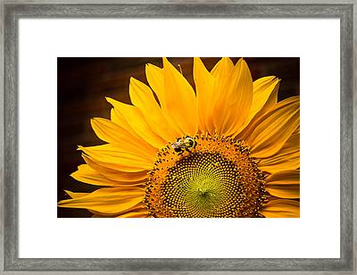 Yellow And Black Framed Print by Sara Frank