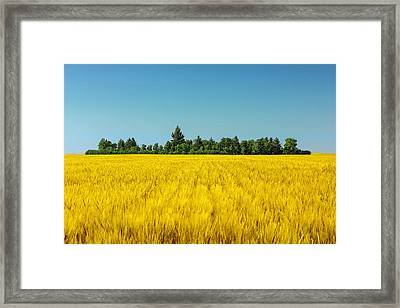 Yellow And Blue Make Green Framed Print by Todd Klassy