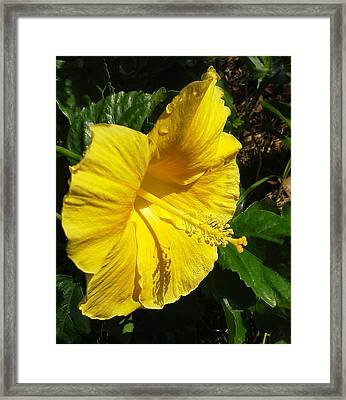 Yellow And Green Framed Print by Gustave Kurz