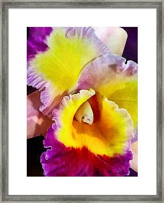 Yellow And Magenta Cattleya Orchid Framed Print by Susan Savad