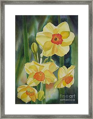 Yellow And Orange Narcissus Framed Print
