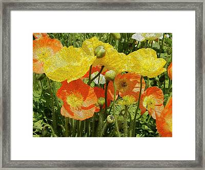 Yellow And Orange Poppies Framed Print by Dee Meyer