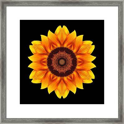 Yellow And Orange Sunflower Vi Flower Mandala Framed Print