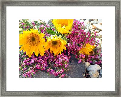Yellow And Pink Framed Print