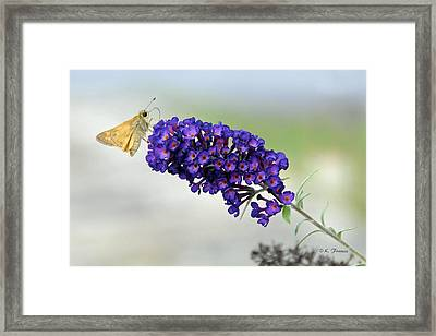 Framed Print featuring the photograph Yellow And Purple by Kenny Francis