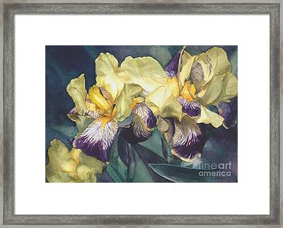 Yellow And Purple Streaked Irises Framed Print by Greta Corens