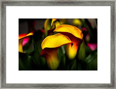 Yellow And Red Calla Lily Framed Print by Menachem Ganon