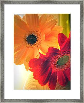 Yellow And Red Gerberas Framed Print