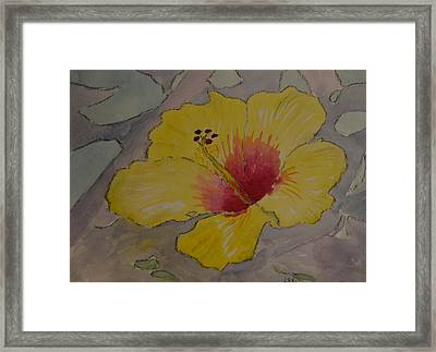 Yellow And Red Hibiscus Framed Print by James Cox