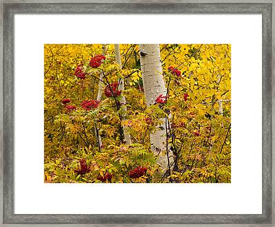 Yellow And Red Framed Print by Leland D Howard