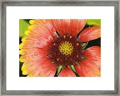 Framed Print featuring the photograph Yellow And Red by Robert Culver