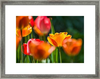 Framed Print featuring the photograph Yellow And Red by Trevor Chriss