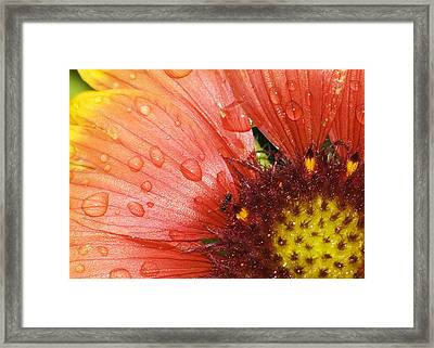 Framed Print featuring the photograph Yellow And Red With Ant by Robert Culver