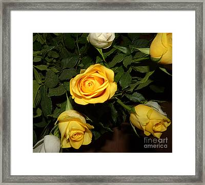 Yellow And White Roses Framed Print