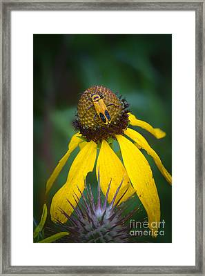 Yellow And Yellow Framed Print by Todd Bielby