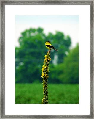 Yellow Framed Print by Andrea Dale