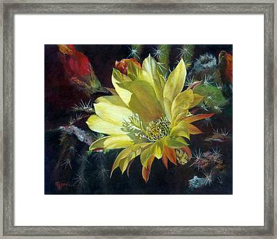 Yellow Argentine Giant Cactus Flower Framed Print