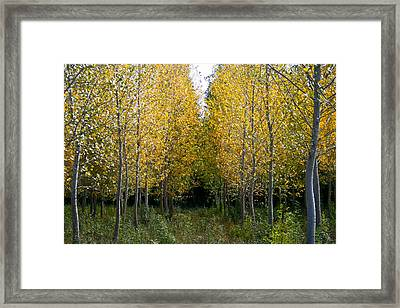 Yellow Autumn Trees In France  Framed Print by Georgia Fowler