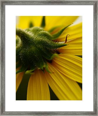 Yellow Backside Framed Print by Alexandra  Rampolla