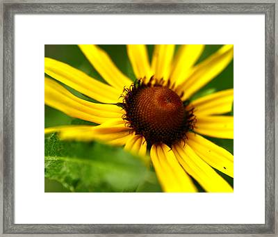 Yellow Beams Framed Print by Alexandra  Rampolla