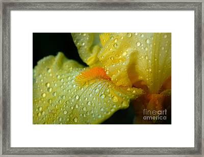 Yellow Beard Framed Print