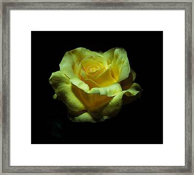 Yellow Beauty Framed Print by Cecil Fuselier