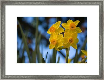 Yellow Beauty Framed Print by Nuno Firmino