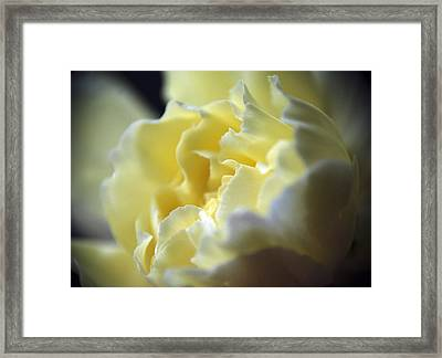 Yellow Beauty Framed Print by Ron Roberts