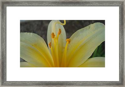 Yellow Beauty Framed Print