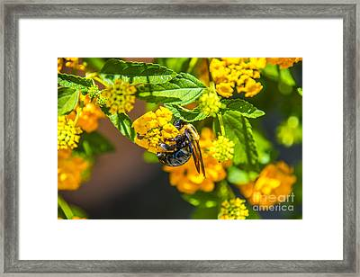 Yellow Bee Yellow Buds Framed Print