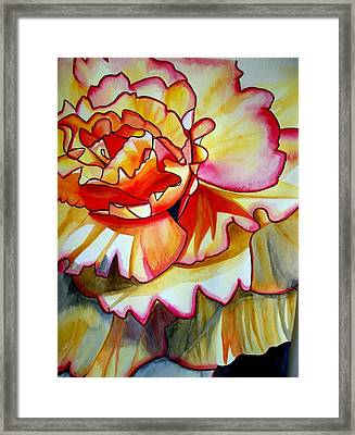 Yellow Begonia Framed Print by Sacha Grossel