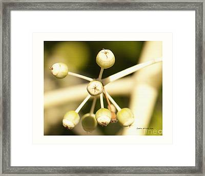 Yellow Berries Framed Print by Artist and Photographer Laura Wrede