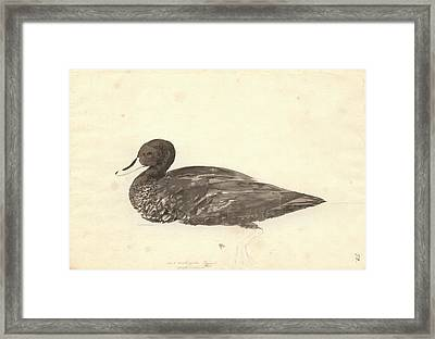 Yellow-billed Duck Framed Print by Natural History Museum, London