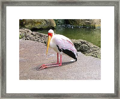 Yellow-billed Heron Framed Print by Sergey Lukashin