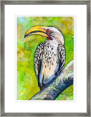 Yellow-billed Hornbill Framed Print by Dave Whited