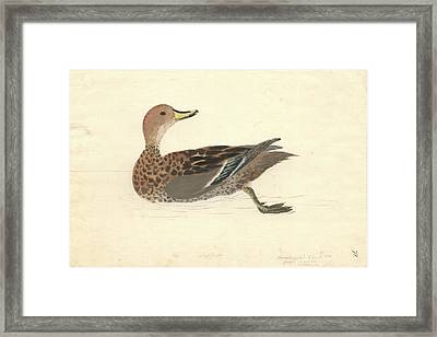 Yellow-billed Pintail Framed Print by Natural History Museum, London