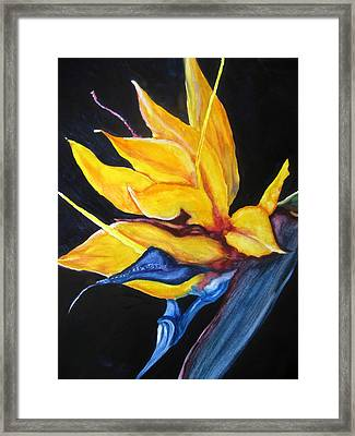 Framed Print featuring the painting Yellow Bird by Lil Taylor