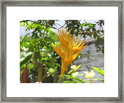 Yellow Bird Of Paradise Framed Print