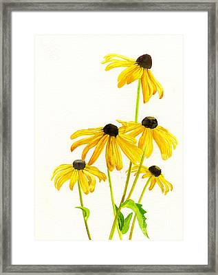 Yellow Black Eyed Susans Framed Print by Sharon Freeman