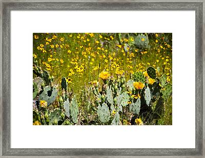 Yellow Blooms Framed Print by Mark Weaver