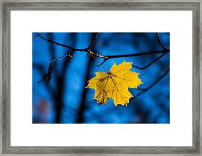 Yellow Blues - Featured 3 Framed Print by Alexander Senin