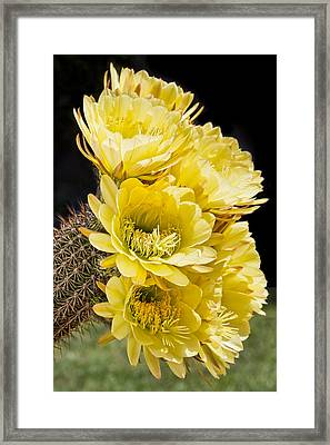 Yellow Bouquet Framed Print by Kelley King