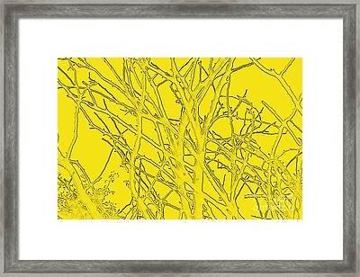 Yellow Branches Framed Print by Carol Lynch